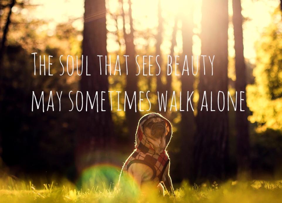 #Goethe #quote