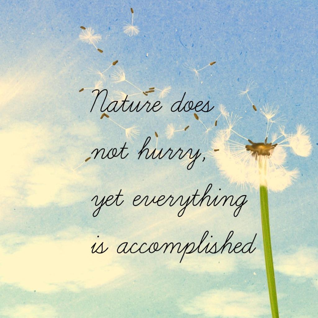 #zen #quote