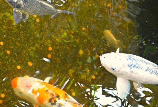 #Fisch #Fish