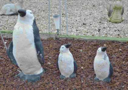 Penguins in the Outback