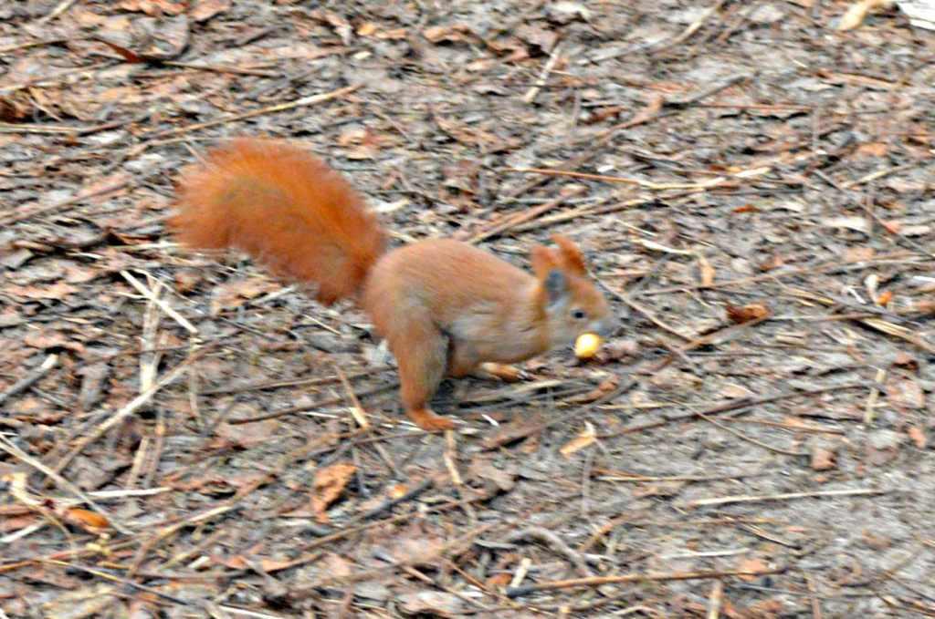 be kitschig blog squirrel Eichhoernchen kitsch photography