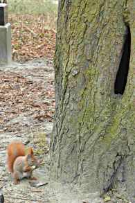 be kitschig blog squirrel Eichhoernchen kitsch photography