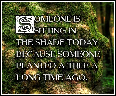 Warren Buffet Quote be kitschig blog Planting Trees