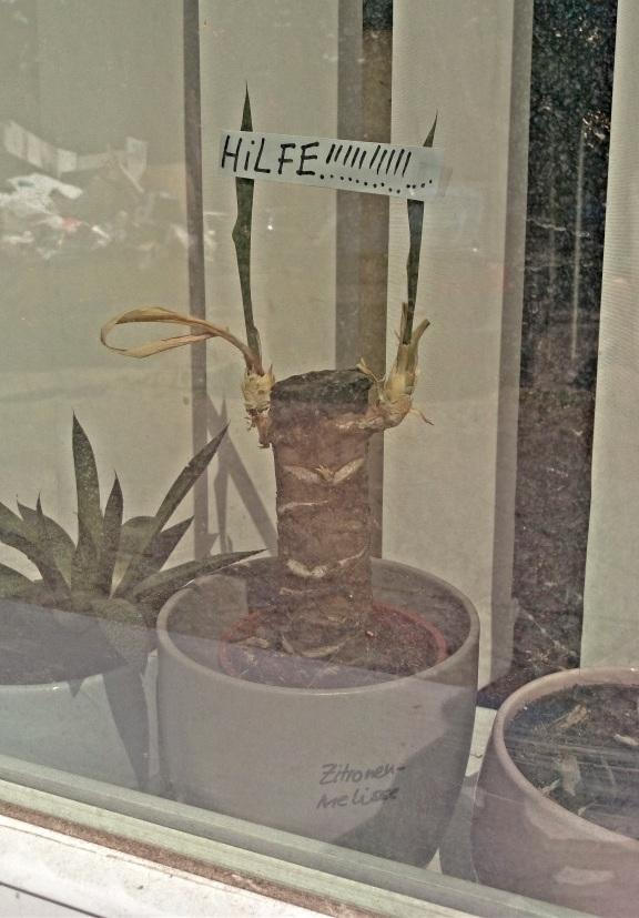 #büro #pflanze #traurig #sad #office #plant