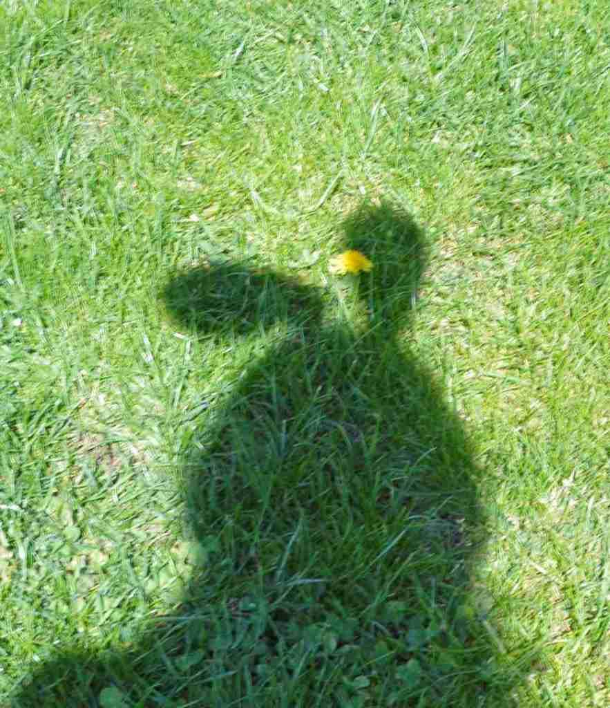 be kitschig blog bunny ears