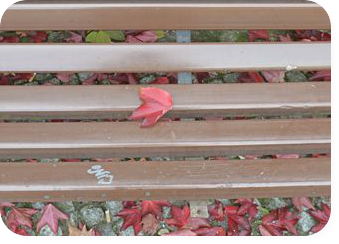 Lines and Leaves be kitschig blog Herbst Photografie Fall Berlin Blaetter